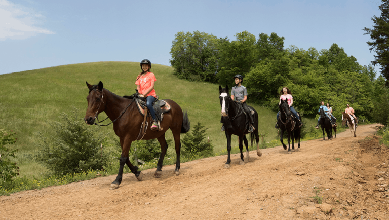 Our guided horseback tours will teach you about the Smokies